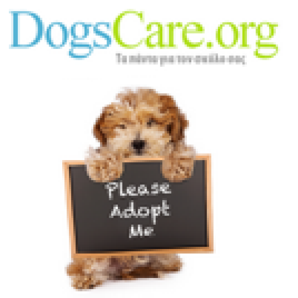 Dogs Care